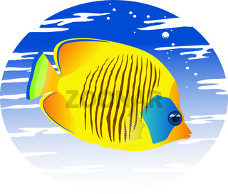 The image of a tropical fish in color