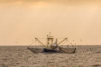 Fischkutter beim Fischen mit Schleppnetz auf der Nordsee