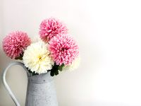 Group of dahlia flowers in a pitcher
