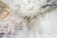 Fungal mold on an interior wall