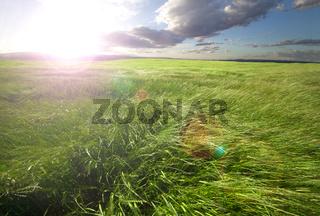 Sunset green fields