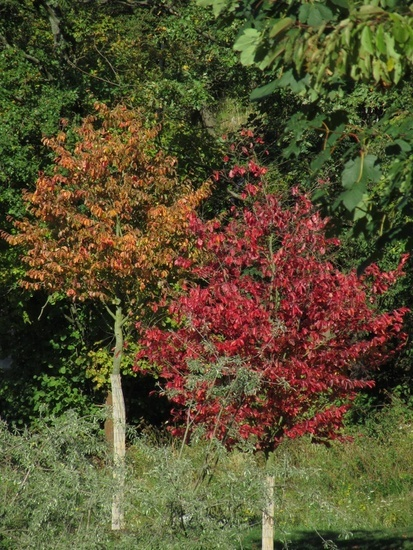 Farbige Blätter im Herbst