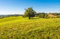 Landschaft mit Koppel und Bäumen bei Hohen Demzin