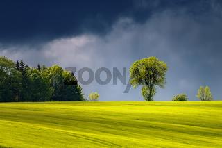 Landscape with illuminated sunlight tree before the storm