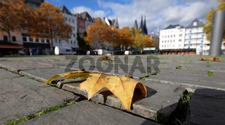 ein Herbstblatt liegt auf dem Kopfsteinpflaster der Kölner Altstadt