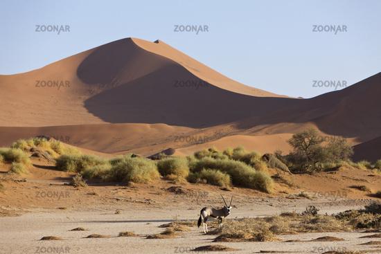 Spiessbock, Namibia