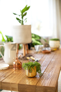 Wooden massive table with gardening tools and green potted plants ready for planting at home