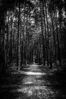 Path through the forest