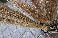 altes Handwerk - getrockneter Flachs zur Leinenfertigung auf dem Handwerkermarkt in Kommern