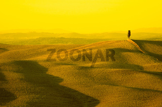 yellow tuscany