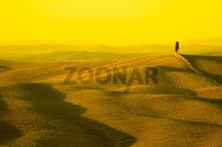 yellow tuscany