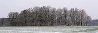 Waldrand mit Schnee