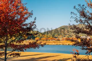 Miryang riverside park at autumn in Miryang, Korea