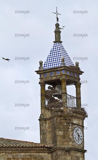 Störche nisten in einem Glockenturm