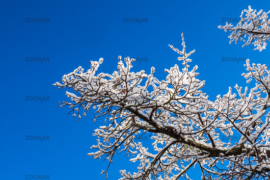 Bäume mit Schnee in der Hansestadt Rostock im Winter