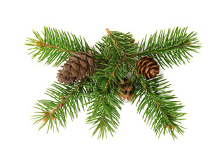 Front view of fir tree branch and cones