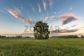 Large oak tree in a meadow with a glowing sky at dusk on a fall evening.