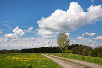 Panoramic landscape with hiking trail, springtime, Bergisches Land, Germany