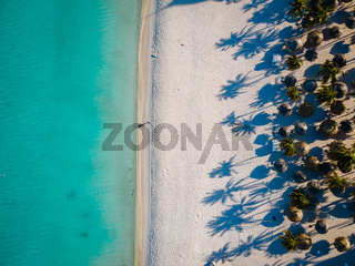 Palm beach Aruba Caribbean, white long sandy beach with palm trees at Aruba