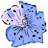 Hibiskusblüte  blau