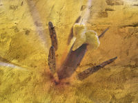 gelbe Tulpe auf Rauputz