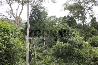 Haengebrueckenverbindung zwischen Regenwaldbaeumen,Canopy walkway