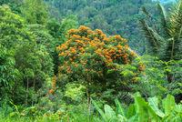 Tropischer Wald in Tana Toraja auf Sulawesi
