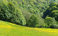 springtime sunlit landscape with flower covered meadow surrounded by bright green woodland near midgehole near hebden bridge in west yorkshire