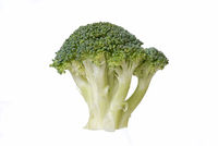 One piece of brocolli isolated on white background.
