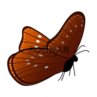 Monarch butterfly isolated on a white background. Side view. Brown wings and white spots on the wings. Vector EPS10.