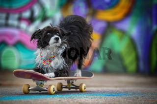 Cute little dog on colorful background