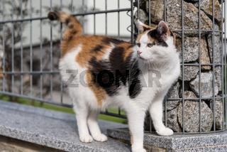 Hauskatze und zugleich Freigänger-Katze - freilaufen
