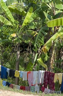 Wäscheleine mit Wäsche zumn Trocknen unter Bananenbäumen