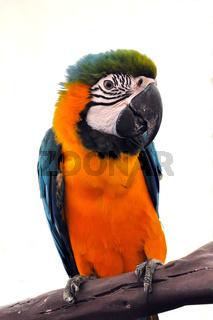 portrait macaw bird