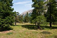 Wald in den Alpen