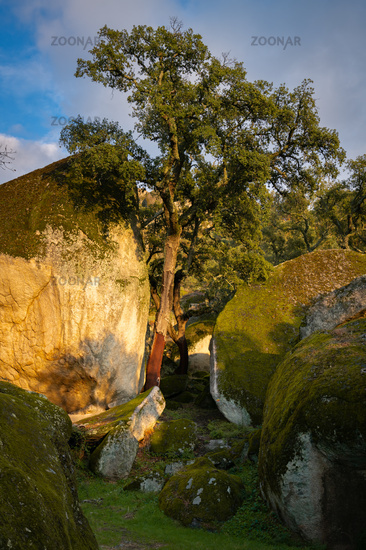 Boulders and trees landscape covered with moss on a green forest tree nature landscape at sunset