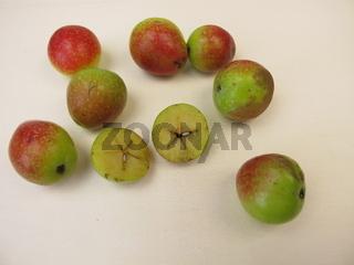 Apfelfrüchte der Hausvogelbeere, Sorbus domestica