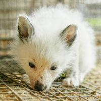 Fox cub in the cage