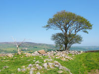 a single tree in a rock covered meadow looking over the calder valley and midgley moor in west yorkshire