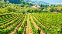 Vineyard in Greece.