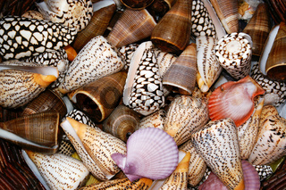 snales and shells