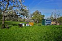 Bienenstöcke, Bienenhaus und Brennholzstapel