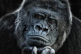 Gorilla in nachdenklicher Pose