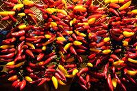 rot und gelb chili schoten bund