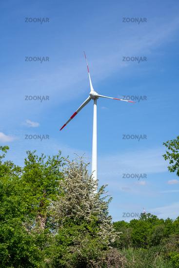 Eine moderne Windkraftanlage hinter einigen Bäumen