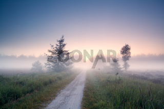 ground road into fog at sunrise