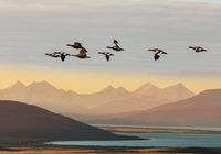 Birds in Patagonia