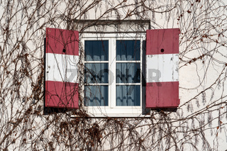 Open traditional window shutters with red white Austrian flag at wall rambeled with leafless ivy