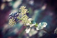 Beeren im Winter