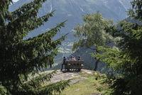 Wanderer zwischen Bellwald und Aspi-Titter Hängebrücke bei Fieschertal Hikers between Bellwald and Aspi-Titter suspension bridge near Fieschertal